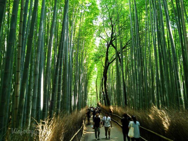 Baño Japones Tradicional:Viaje a Japón de 10 días – Ejemplo para visitar lo más famoso