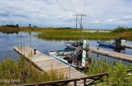 Visitar Los Everglades en Aerodeslizador