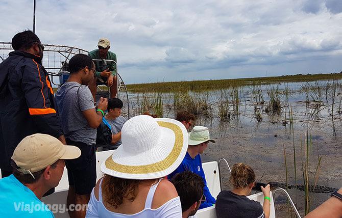 ver caimanes en Florida