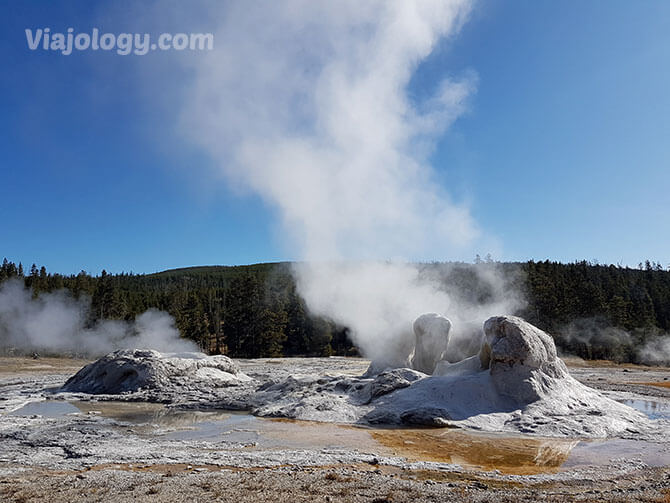 Grotto Geyser en Yellowstone